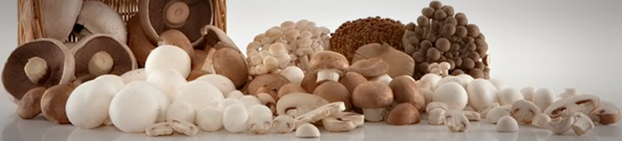 We believe in Superfood qualities of Mushrooms!