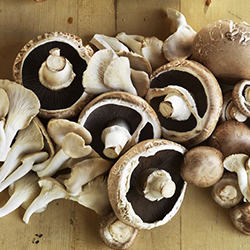 Indus Mushrooms - Indus Mushrooms